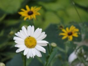 Summer 2011 089